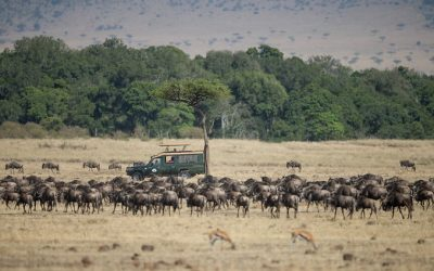 Women and Wildebeests