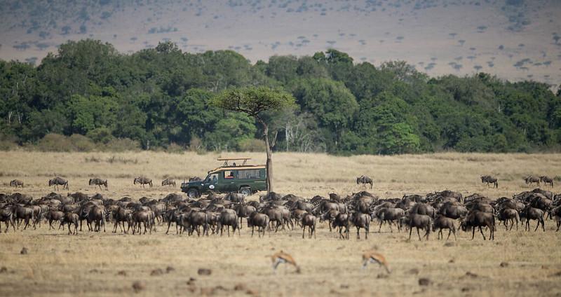 Women and Wildebeests
