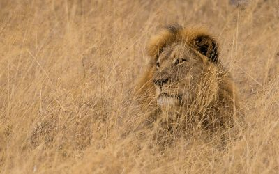 Episode on 'Cecil the Lion' for podcast series